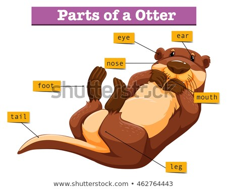 Diagram showing parts of otter Stock photo © bluering