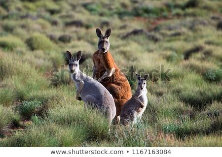 Famiglia illustrazione tramonto deserto divertente animale Foto d'archivio © adrenalina
