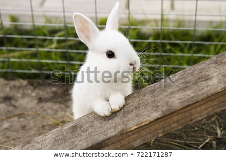 Cute rabbit with gray fur Stock photo © bluering