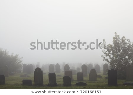 cemetary Stock photo © drizzd