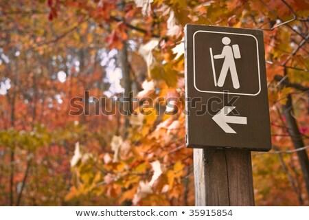 Bos wandelen parcours richting pijl borden Stockfoto © stevanovicigor