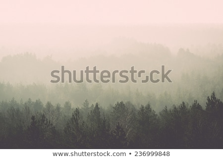 rays of the sun in a misty forest stock photo © kotenko