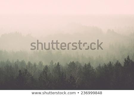 Foto stock: Sol · brumoso · forestales · otono · paisaje
