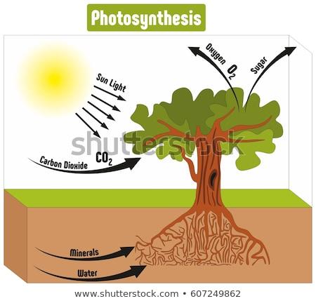 Nauki edukacji wody słońce streszczenie charakter Zdjęcia stock © bluering