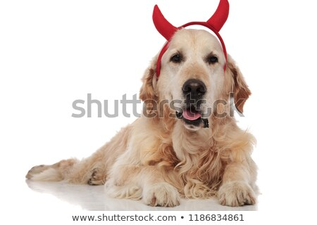 Cute labrador diable halloween mensonges pants Photo stock © feedough