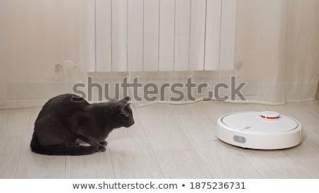 страшно робота кошки Cartoon иллюстрация глядя Сток-фото © cthoman