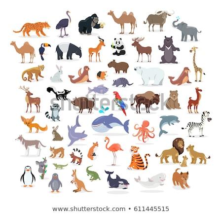 лев · семьи · иллюстрация · животного · вектора - Сток-фото © colematt