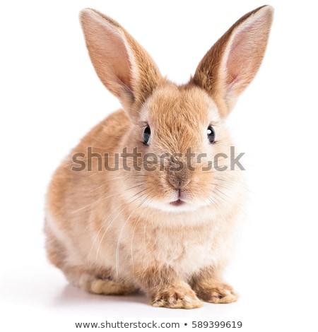 Easter · Bunny · kant · vergadering · witte · achtergrond - stockfoto © anna_om