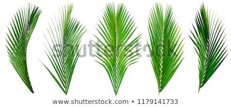 Frontera hoja de palma aislado gradiente nina Foto stock © barbaliss