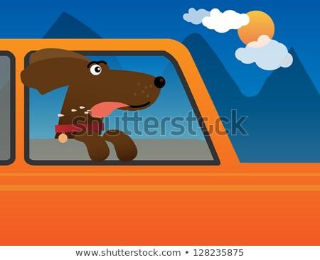 Funky собака глядя окна весело недвижимости Сток-фото © Bananna