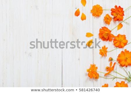 оранжевый цветок дождь Восход красивой капли Сток-фото © photoblueice
