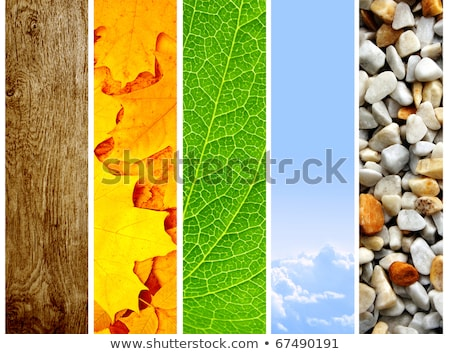 fresh natural autumn vertical banners with leafs stock photo © orson