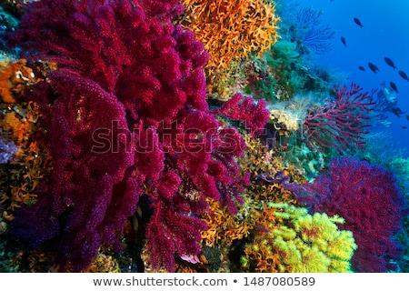 サンゴ · 赤 · 水 · 魚 · 海 · 美 - ストックフォト © Laracca