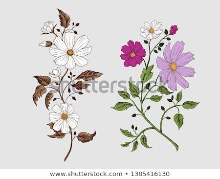 various cosmos flowers stock photo © ivonnewierink