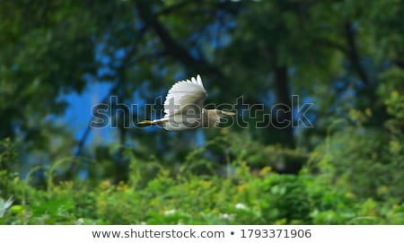 insectos · pico · aves · boca · animales · insectos - foto stock © pazham