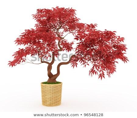 japán · juhar · fa · tavasz · piros · kert - stock fotó © tab62