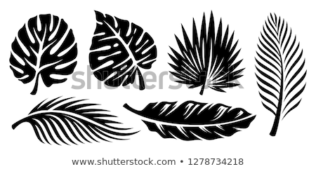 Stock photo: Palm Fronds