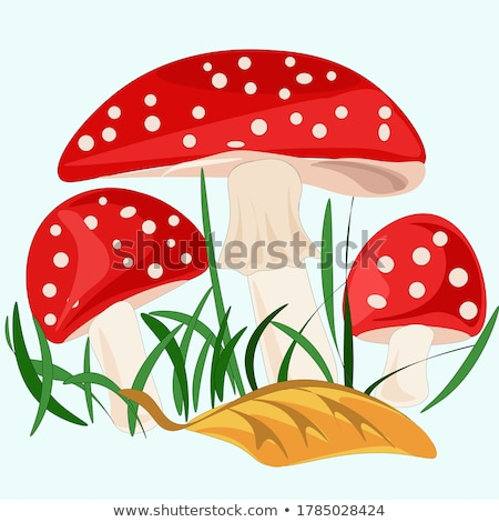 fly agaric Stock photo © marunga