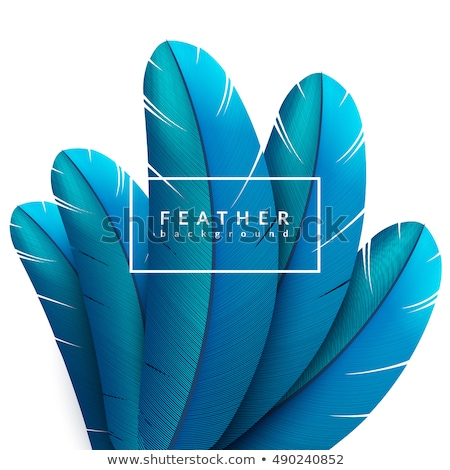 Vector Composition with feathers Stock photo © alexmakarova