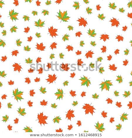 Bordo folhas vermelho amarelo natureza quadro Foto stock © anbuch