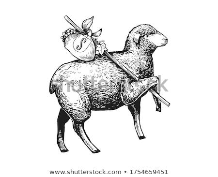 Sheep Head on a Stick Stock photo © rhamm