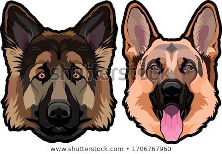 cão · sessão · bassê · ouvido · para · cima · escuta - foto stock © jarin13