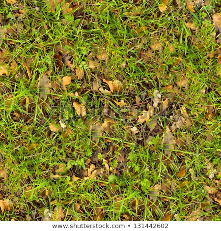 Seamless Tileable Texture of Forest Lawn. Stock photo © tashatuvango