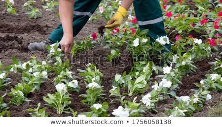 garden and flower service in detail Stock photo © compuinfoto