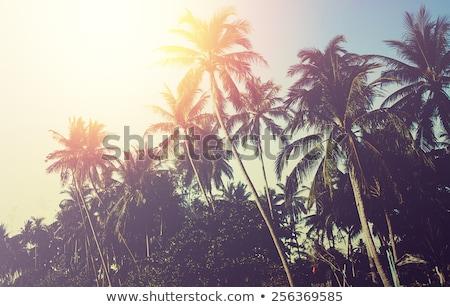 Tropikal plaj bağbozumu instagram etki palmiye ağaçları su Stok fotoğraf © dariazu