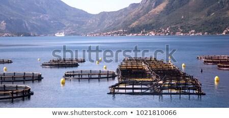 Istiridye liman New York örnek görüntü kamu Stok fotoğraf © Stocksnapper