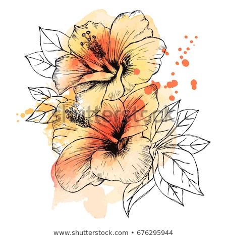 piros · fehér · grafikus · hibiszkusz · virágmintás · végtelen · minta - stock fotó © netkov1