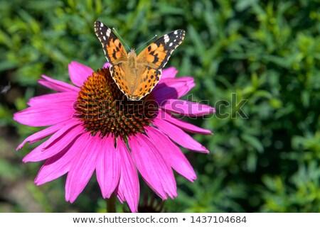 flor · saúde · ervas · bem-estar · droga · flor - foto stock © compuinfoto
