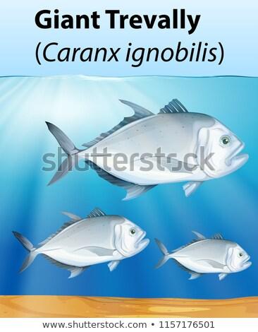 óriás poszter illusztráció víz hal háttér Stock fotó © bluering