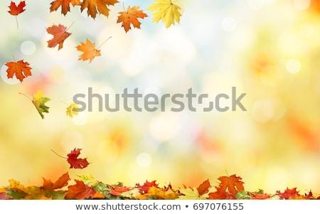 Autunno rovere foglie ramo decorativo intonaco Foto d'archivio © kostins