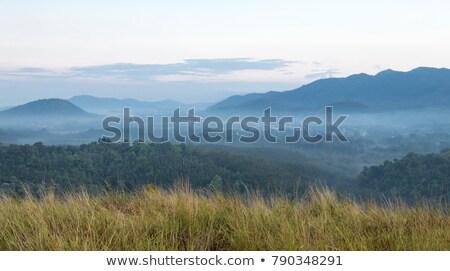 tajemniczy · świetle · mglisty · lasu · jesienią · niebieski - zdjęcia stock © lightpoet