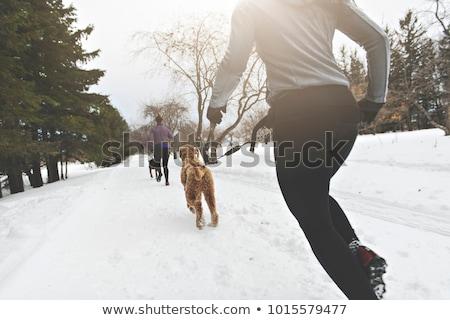 Köpekler genç kış sezonu köpek mutlu Stok fotoğraf © Lopolo