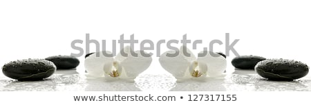 Spa базальт камней белый орхидеи нежный Сток-фото © mythja