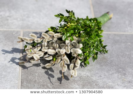 Stock photo: pussy willow branches on stone background