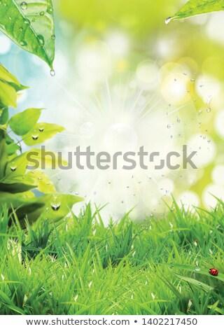 Stockfoto: Groen · gras · zonnige · bokeh · verticaal · gras · abstract