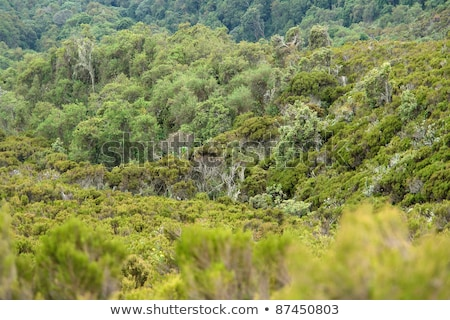 vegetation around Mount Muhabura in Uganda Stock photo © prill