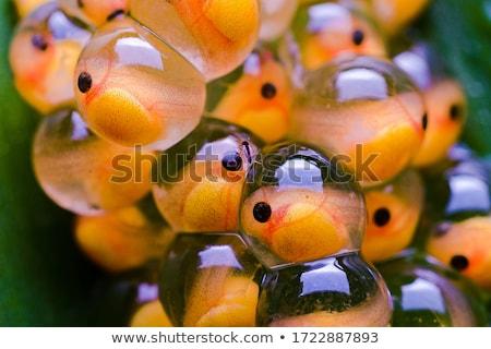 Grenouille Goldfish illustration joyeux vert verre Photo stock © brux