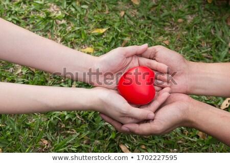 Médico vermelho coração mão amor médico Foto stock © EwaStudio
