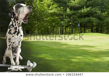 犬 演奏 ゴルフ 屋外 良い 天気 ストックフォト © karelin721