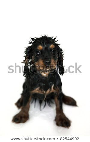 baby and puppy getting bath stock photo © willeecole