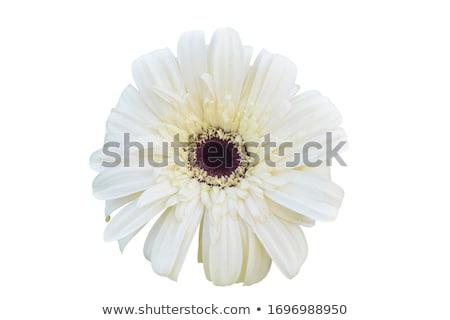 白 デイジーチェーン 花 花束 表 ストックフォト © franky242