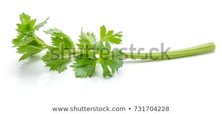 Yeşil kereviz beyaz gıda renk pişirme Stok fotoğraf © ozaiachin