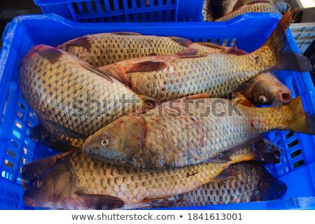 Close up of Oysters in a basket at the fish market Stock photo © gemenacom