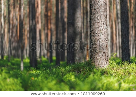 Előtér sziluett szett fa fák fekete Stock fotó © Bigalbaloo