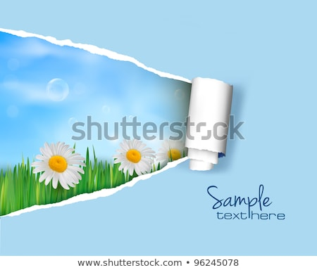 Green Grass And Ripped Paper Nature Background Stock photo © adamson