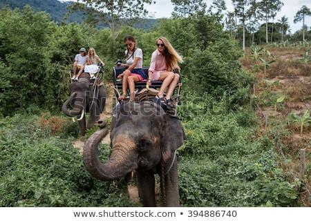 少女 ライディング 象 ジャングル 実例 幸せ ストックフォト © bluering